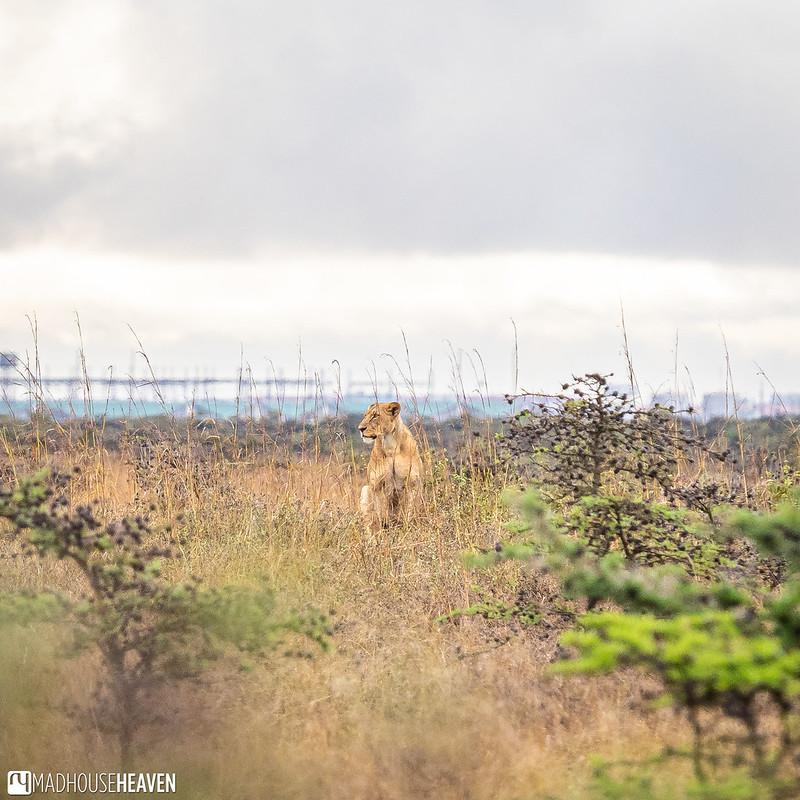 Kenya - 2784