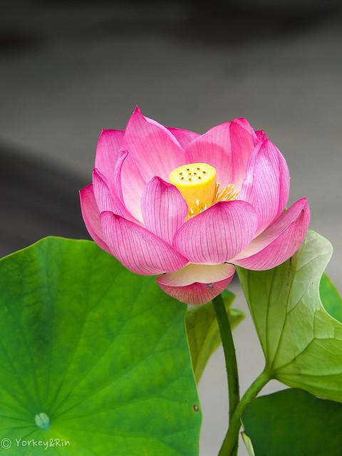 2019 Lotus #1