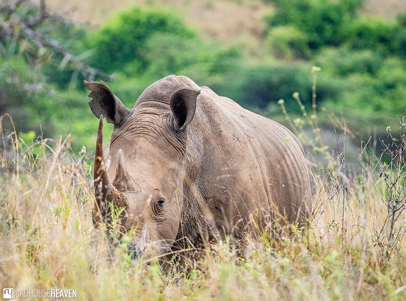 Kenya - 2858