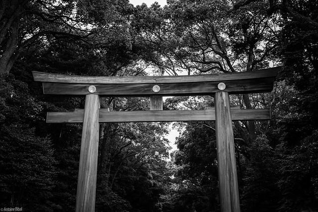 Meiji-Jingu Torii