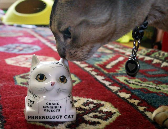 phrenologycatFreddy08670