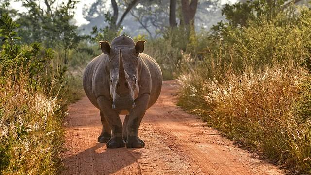 Rhino Roadblock
