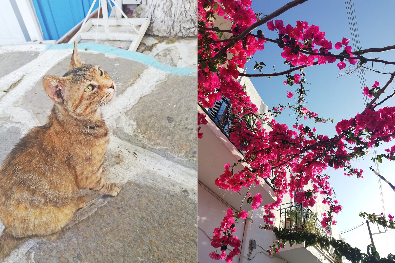 cat-paros-oldtown-parikia-flowers