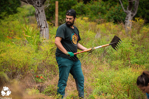 BCG - Teams for Trees Event - Lower Topanga Creek
