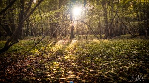 light sunset trees woods