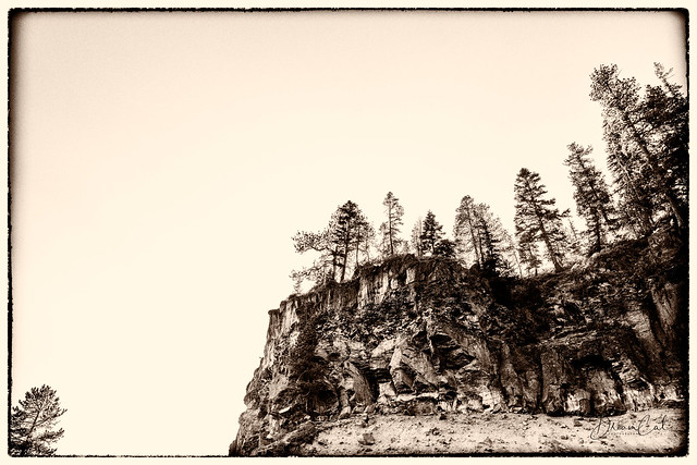 Trees along the cliff