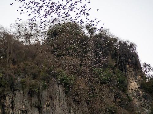 The 'Bat Show'