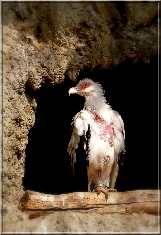 Portrait d'oiseaux - Page 2 48235665967_08bc1de245_b