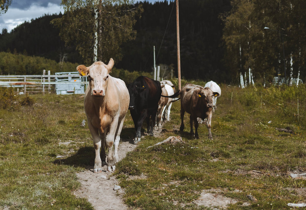190701 - Hos Paulina i Nordingrå
