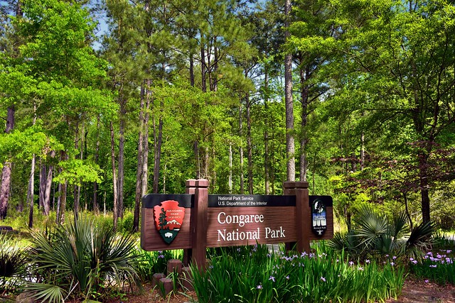 Another National Park to Visit! (Congaree National Park)