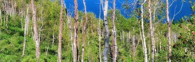 Aspen Line and Me (reflection below)