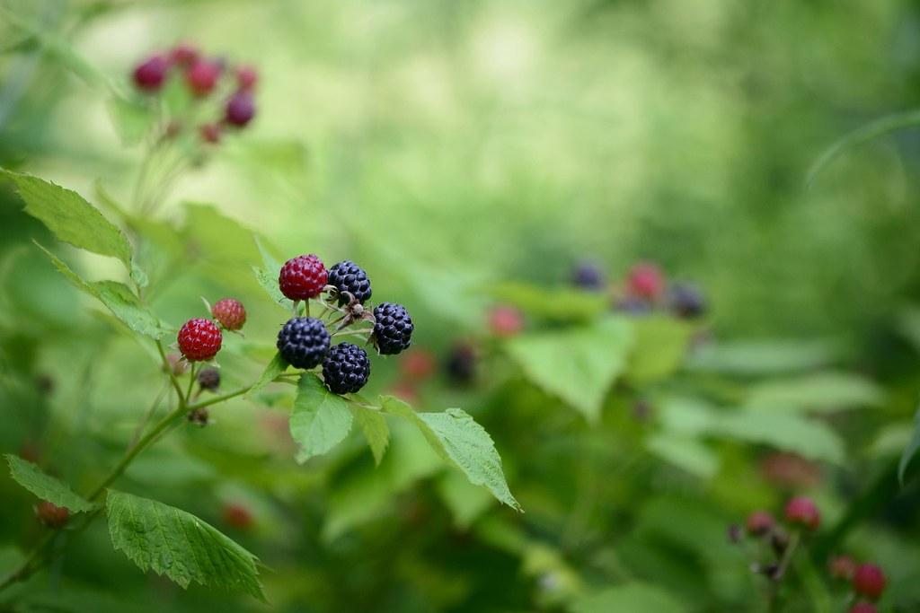 Razzle-Dazzle Berries