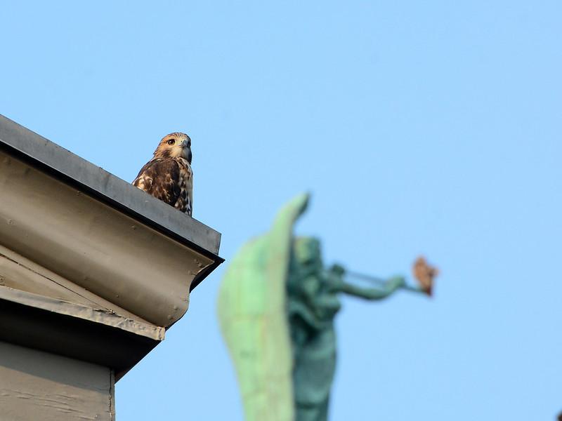 Two Hawks - 4014