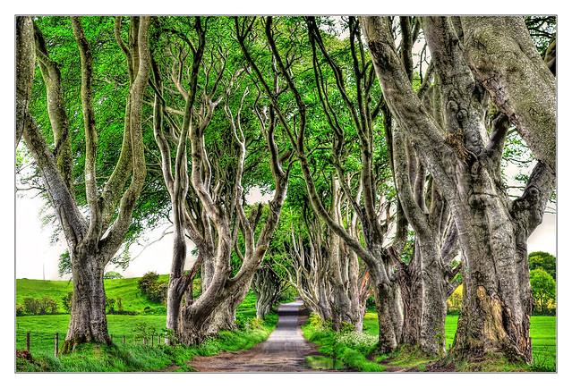 Bregagh Road NIR - Dark Hedges 03