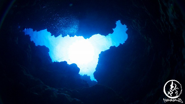 深場洞窟はテンジクダイ系もいなくて寂しかったな。。