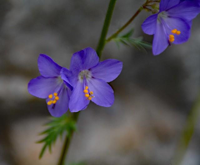 Fiorellini selvatici in valle di Solda