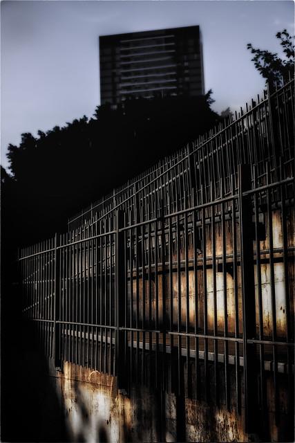 A Sunlit Fence