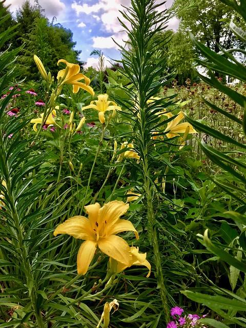 Gardens Brighten Our Day