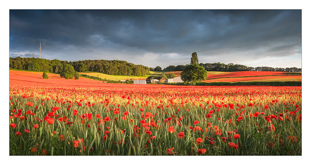 Bewdley Poppy Pano