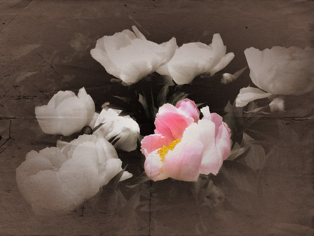 And then the day came, when the risk to remain tight in a bud was more painful than the risk it took to Blossom. Anaïs Nin