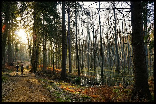 Zwei in einem Wald