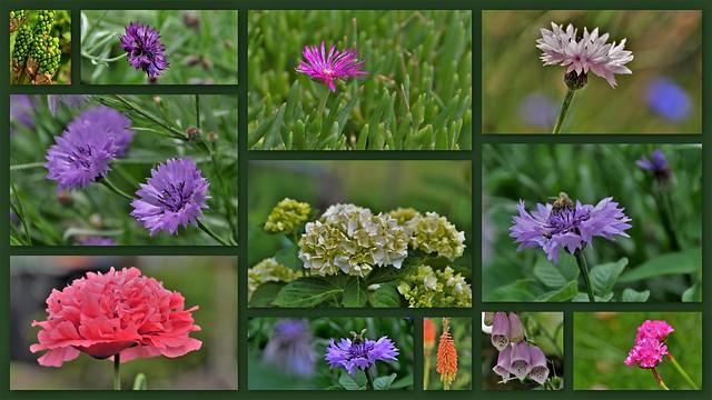 Flora in June  in the Netherlands (2)