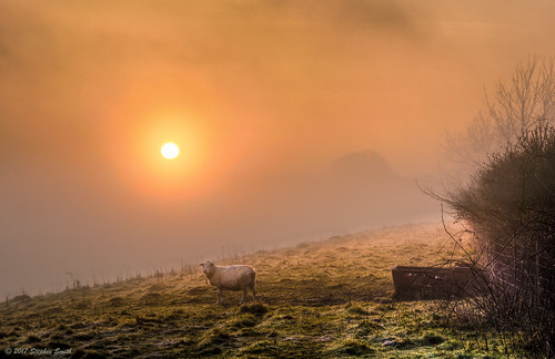 2017 april spring geddington newton northamptonshire eastmidlands england english uk landscape countryside rural nature natural sheep farming fields frost sunlight dawn sunrise mist misty magical nikon d7200 hdr peaceful tranquil beautiful hedgerows field watertrough