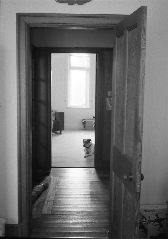 Dog and the Doorways