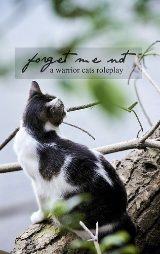 FORGET ME NOT || a warrior cats rpg 48245446446_8215b1bd88