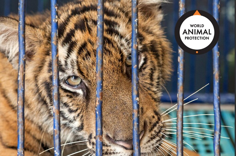 World Animal Protection releases new report: Trading Cruelty