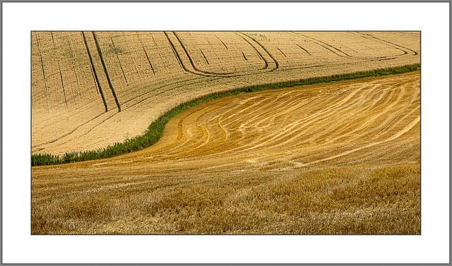 Erntezeit (harvest time)