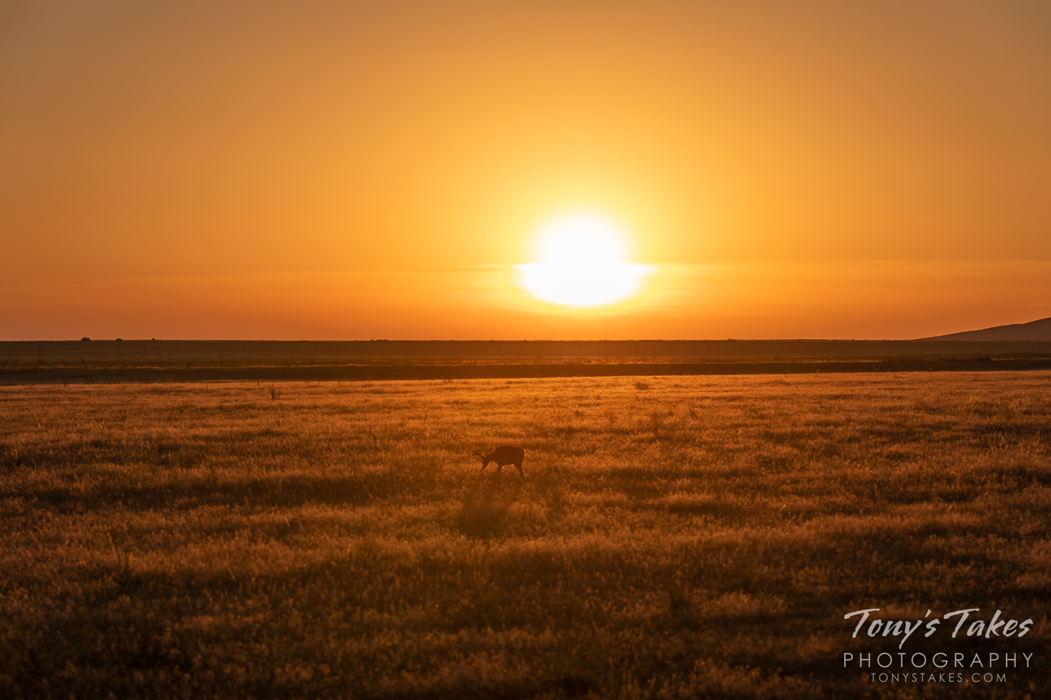 A mule deer buck grazes on the Great Plains at sunrise. (© Tony's Takes)