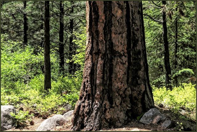 Woodland Study -6-