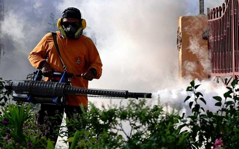 dengue cases
