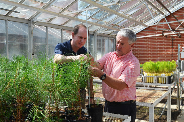 Ryan Nadel and Scott Enebak measure the height of loblolly pine seedlings