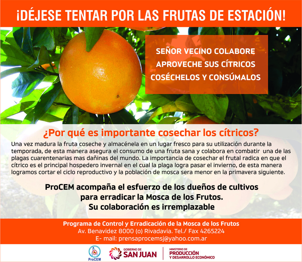 2019-07-10 PRODUCCIÓN: Mosca de los Frutos: finaliza el período de cosecha de cítricos