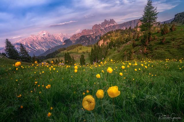 Bucolic Alps