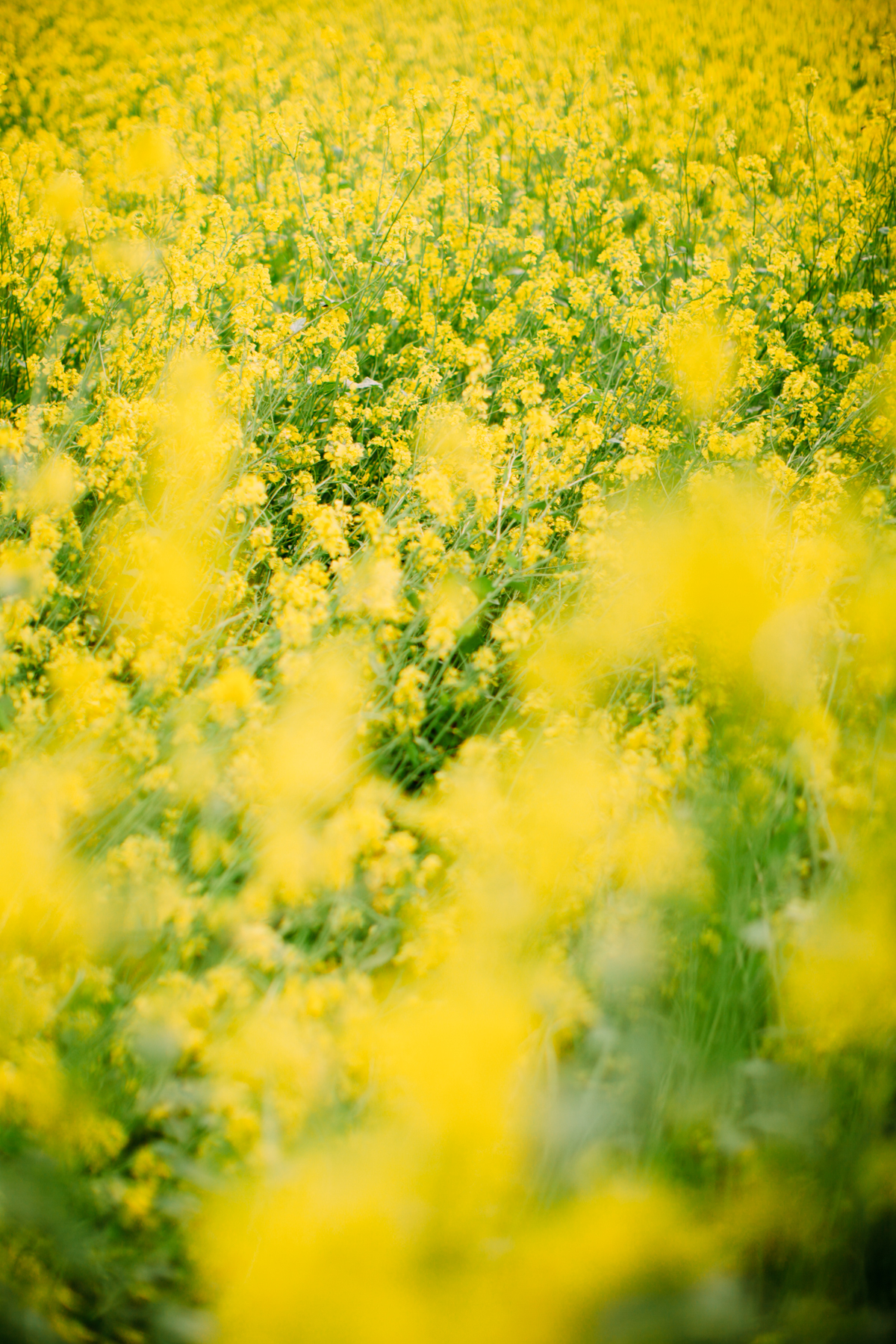 floral dress yellow field-51