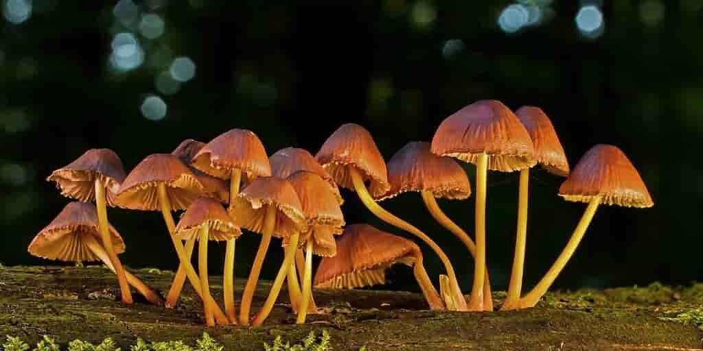 champignons-magiques-utilisation-en-médecine(
