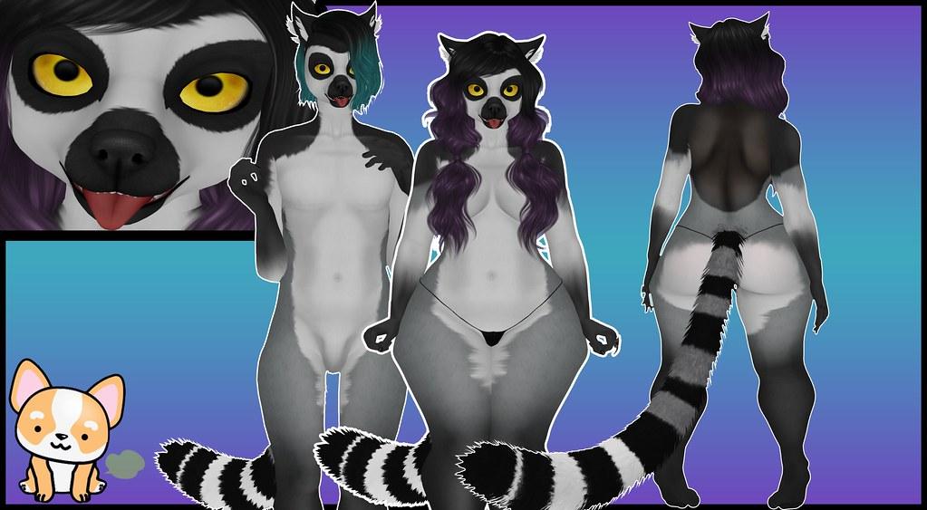 Corgi Poots - Ring-tail lemur - TeleportHub.com Live!