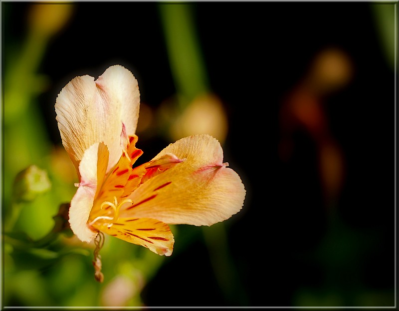 Au jardin des plantes. - Page 2 48252594111_a027c72d89_b