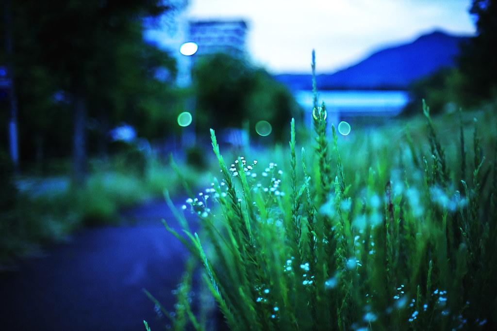 dawn blue