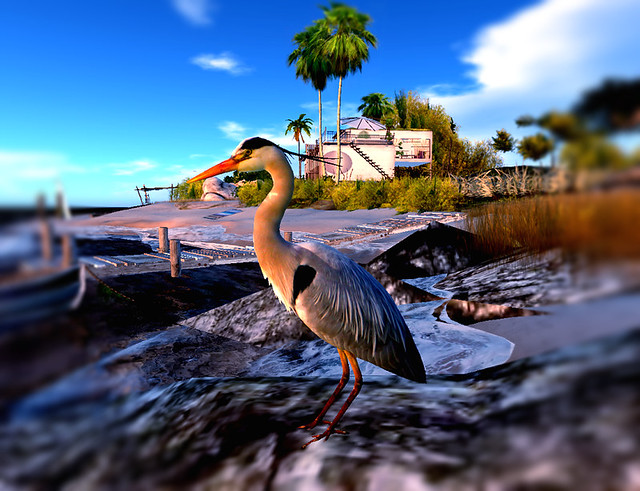 Where Peaceful Waters Flow - Mid Day Blue Heron