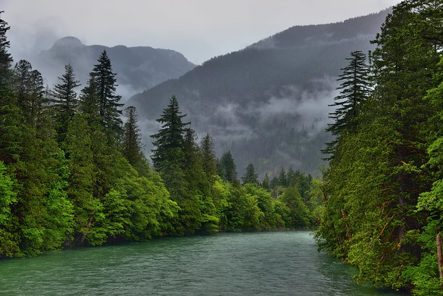 Forests and Mountains as a Backdrop to Viewing the Skagit River (Ross Lake National Recreation Area)