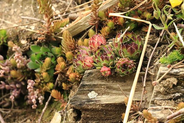 Plantes des Pyrénées
