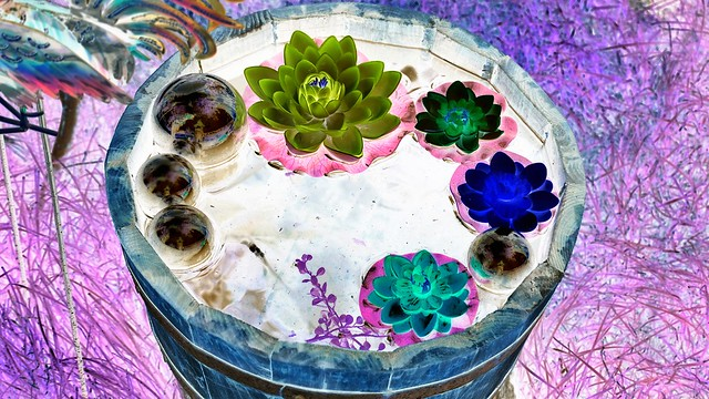 Plastikblumen im Wassertrog Negativ in Wassertrüdingen