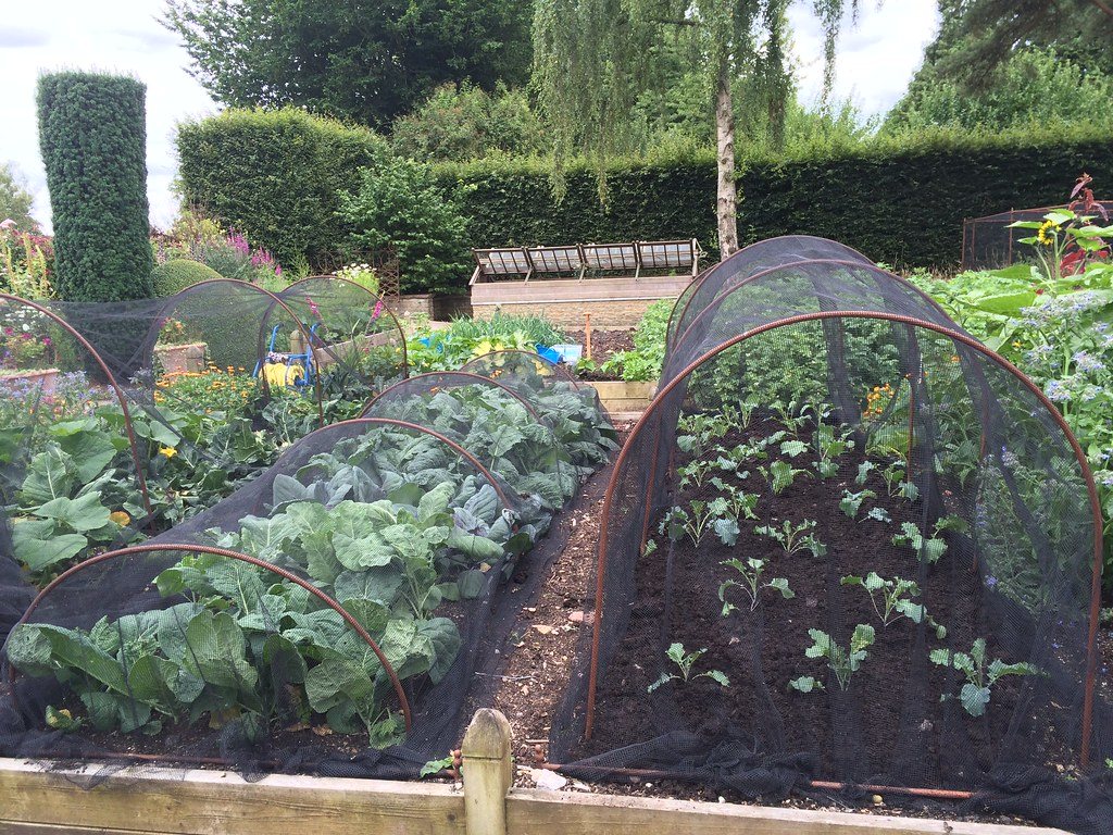 Allotment garden with hoops covering crops
