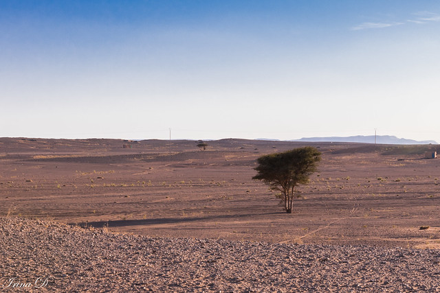 The other face of the Sahara