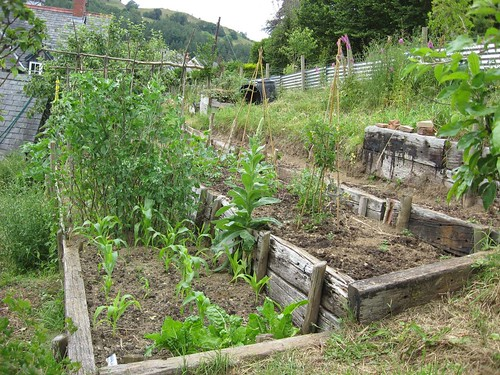 Veg beds - July_rszd(2) | by garynortheast10002011