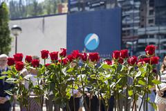 Las rosas rojas colocadas por concejales/as y ciudadanía.